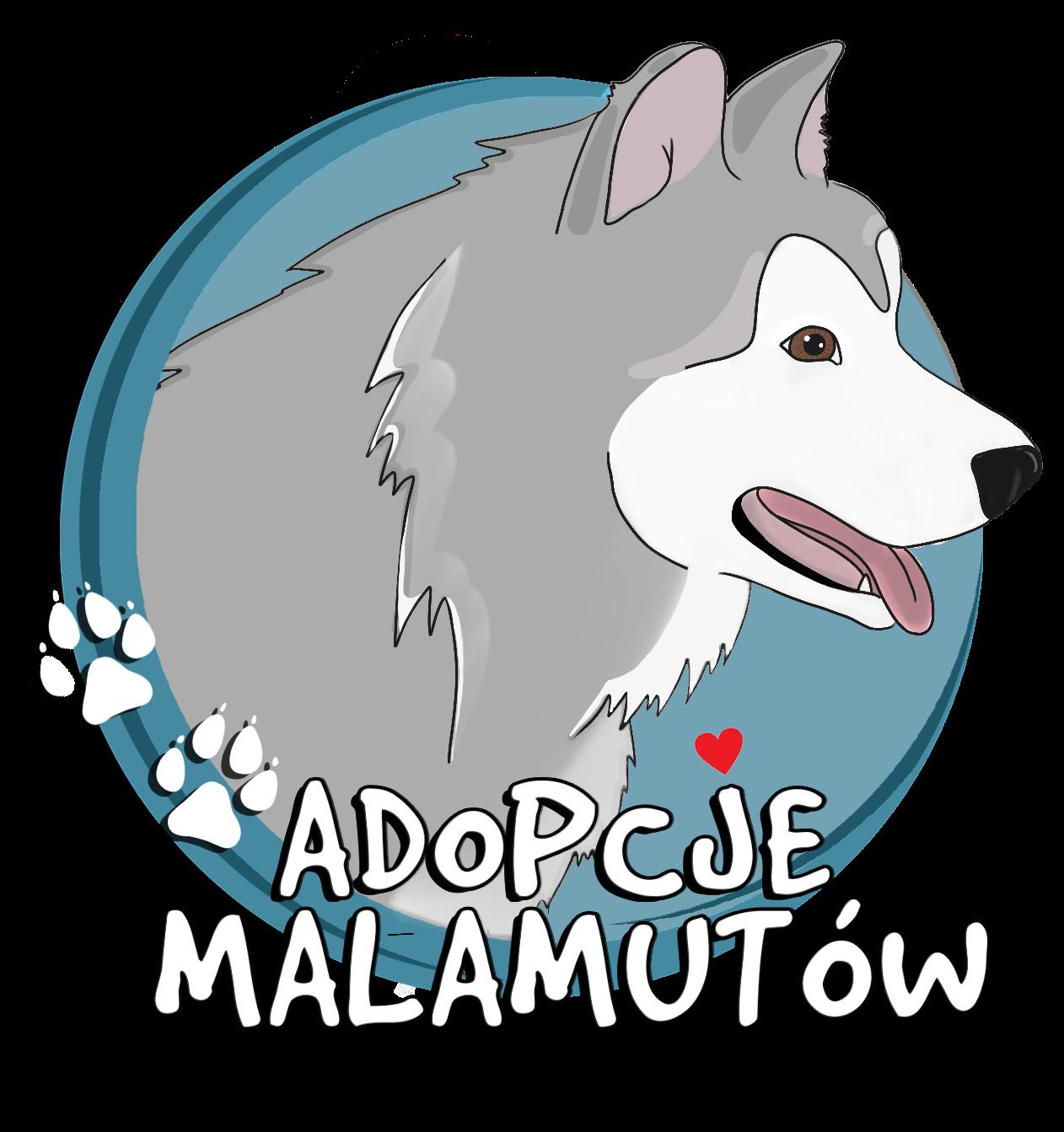 Adopcje Malamutów Fundacja Skrzydlaty Pies